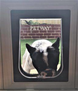 dog entering through a fly screen pet door